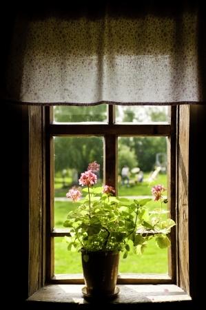 window shade: Florero con una flor en la casa de campo alf�izar