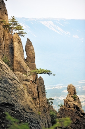 Pine trees on the steep cliffs photo