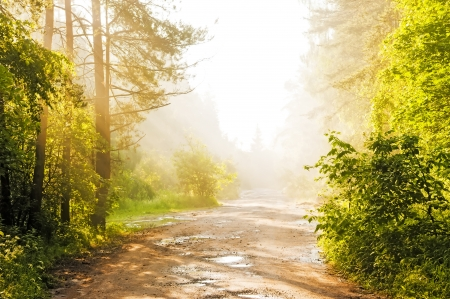 Forest road in the fog