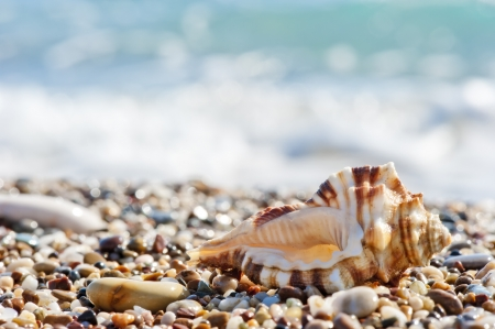 water's edge: Seashell on sand and pebble beach by the sea.