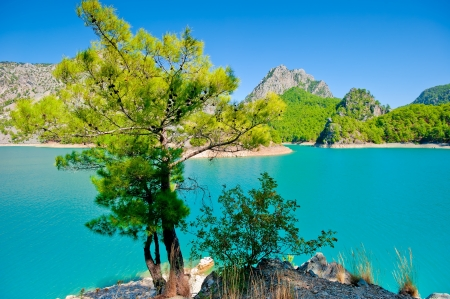 Small green tree against the azure waters of a mountain lake photo