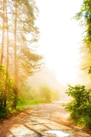 sun lit: Forest road in the fog