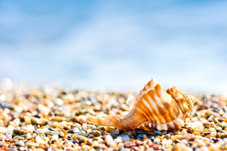 Seashell on sand and pebble beach by the sea  photo