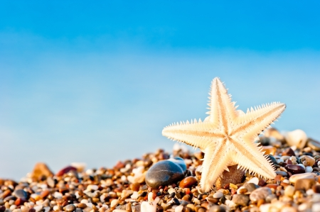 Starfish lying on the sand beach. photo