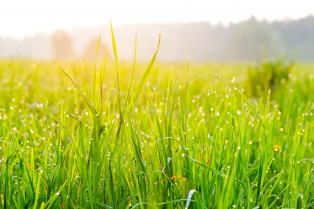 Close-up of fresh grass on meadow photo