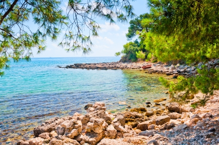 mediterranean forest: rocky beach and a picturesque pine forest