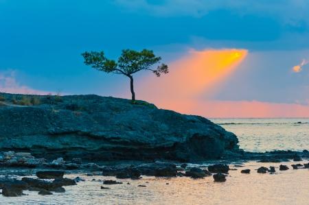 lone pine: solitario pino en una costa rocosa y rayo