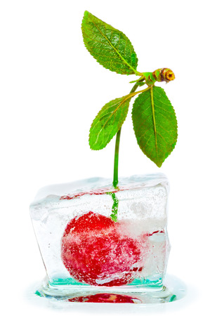ripe cherries with green leaves frozen in ice cube