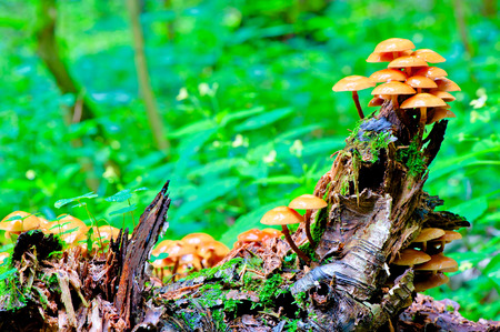 stump with toadstools in the green forest photo