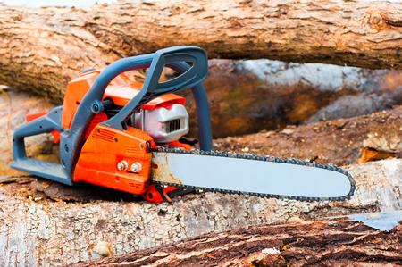 chainsaw closeup on a felled forest photo