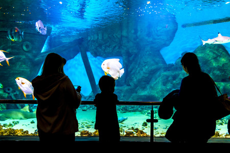 oceanarium: silhouettes of people in the Oceanarium and beautiful fish