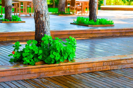 well maintained: wooden flooring in the park and well maintained trees
