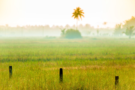 climate morning: morning mist on the field in a tropical climate