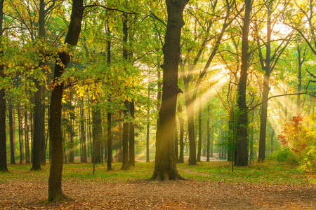 bright rays of the sun in the morning empty forest