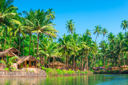 hectic: tropical palms and bungalows to relax from the hectic