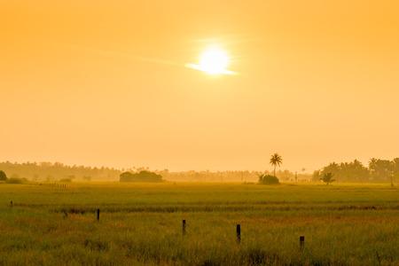agriculture india: bright orange sun at sunrise over a field in the tropics