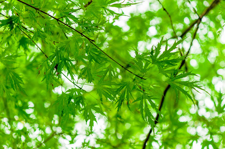 twiggy: juicy green branch with young leaves in the spring
