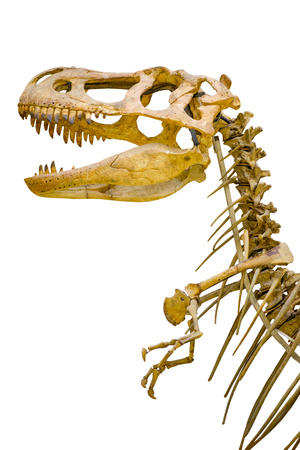 a fragment of the skeleton of Tyrannosaurus rex on white background isolated Foto de archivo