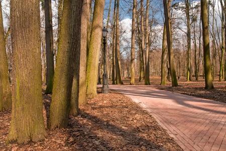 pedestrians: empty autumn park with paths for pedestrians