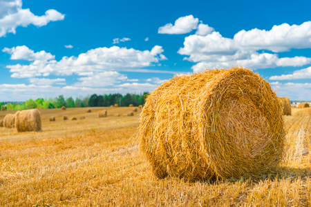 animal feed: dry grass rolled up in a roll to animal feed Stock Photo