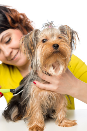 thick hair: young girl brushing her pet thick hair a brush