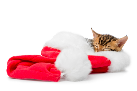 christmas pussy: red Christmas hat and a sleeping kitten on a white background