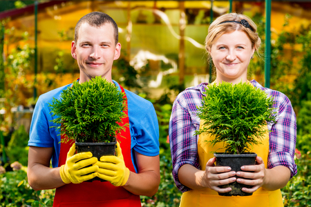 Experienced gardeners with seedlings in the pots in the greenhouse Stock Photo
