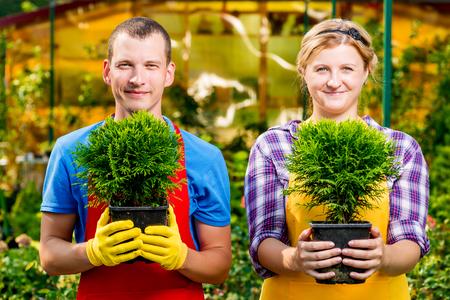 Jardineros con plántulas tradicionales en las ollas en el invernadero Foto de archivo - 76274321