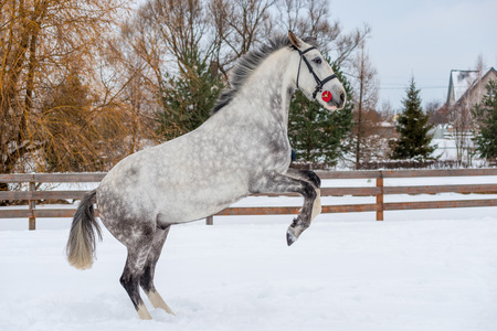 A beautiful horse climbed up on the snow in the field