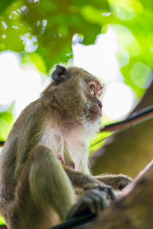 portrait of a monkey looking away on a background of green foliage Stock Photo