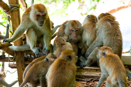 amicable family of monkeys are kept together in the wild Stock Photo