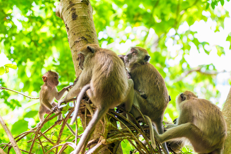 a group of monkeys munching on a tree in Asia Stock Photo