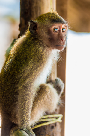 vertical portrait of a monkey in a natural habitat Stock Photo