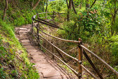 Path in Asia amongst trees of jungle, Thailand Stock Photo