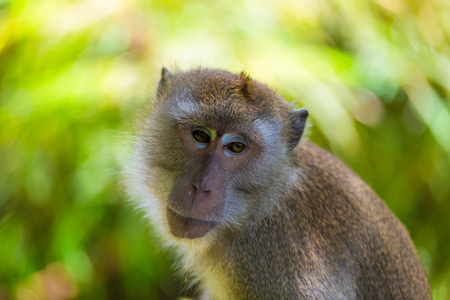 upset monkey face expression in the wild Stock Photo