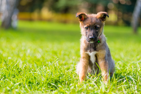 portrait of a puppy in a park on green grass on a summer day