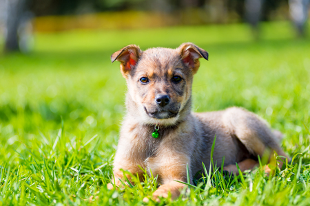 calm beautiful puppy posing sitting on grass in park Stock Photo