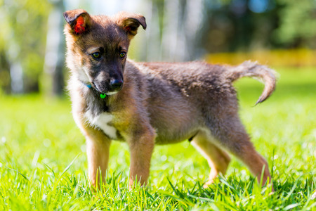 playful puppy on a background of green grass in a park close-up  Stock Photo
