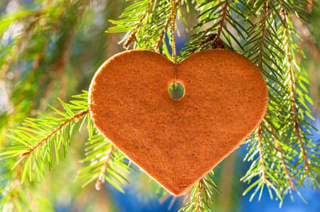 tasty ginger cookies in the shape of heart hanging on firs in the forest