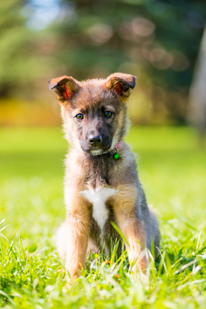 vertical portrait of a puppy in a park on green grass on a summer day