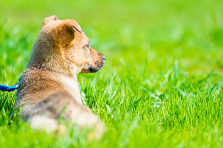 wary puppy resting in a juicy green grass on a lawn Stock Photo
