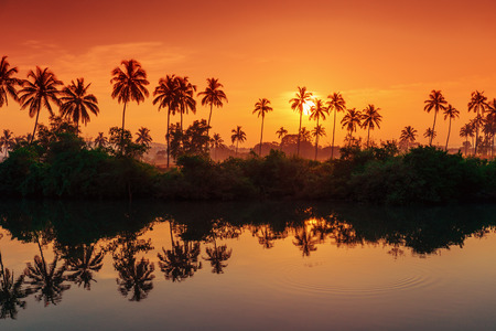 rows of palm trees reflected in a lake at dawn. Tinted in red.
