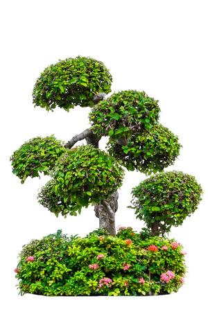 beautiful decorative tree isolated on white background