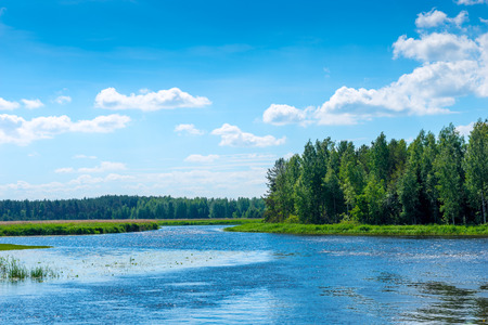 beautiful scenery on a sunny day - a river in the countryside