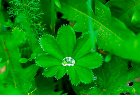 Close-up of nature - a big drop of dew in a green grass Stock Photo