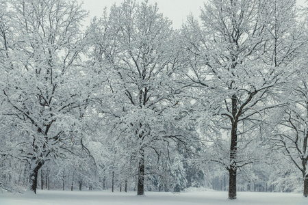 Three trees stand covered with snow like velvet, winter landscape