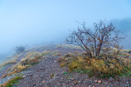 naked bush in the mountains in autumn, landscape with dense fog
