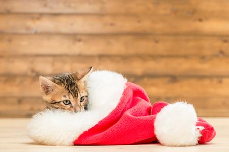 brown little kitten in a red Santa hat resting