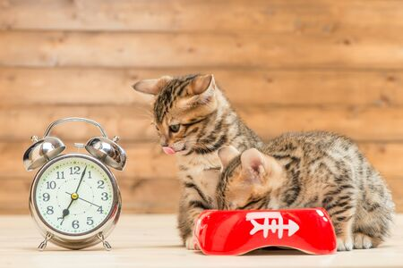 concept photo is time for breakfast, two kittens are drinking milk next to the alarm clock, which shows 7 am Archivio Fotografico