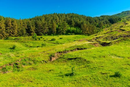 Thick forests and lush green grass in the mountains of Armenia on a sunny summer day